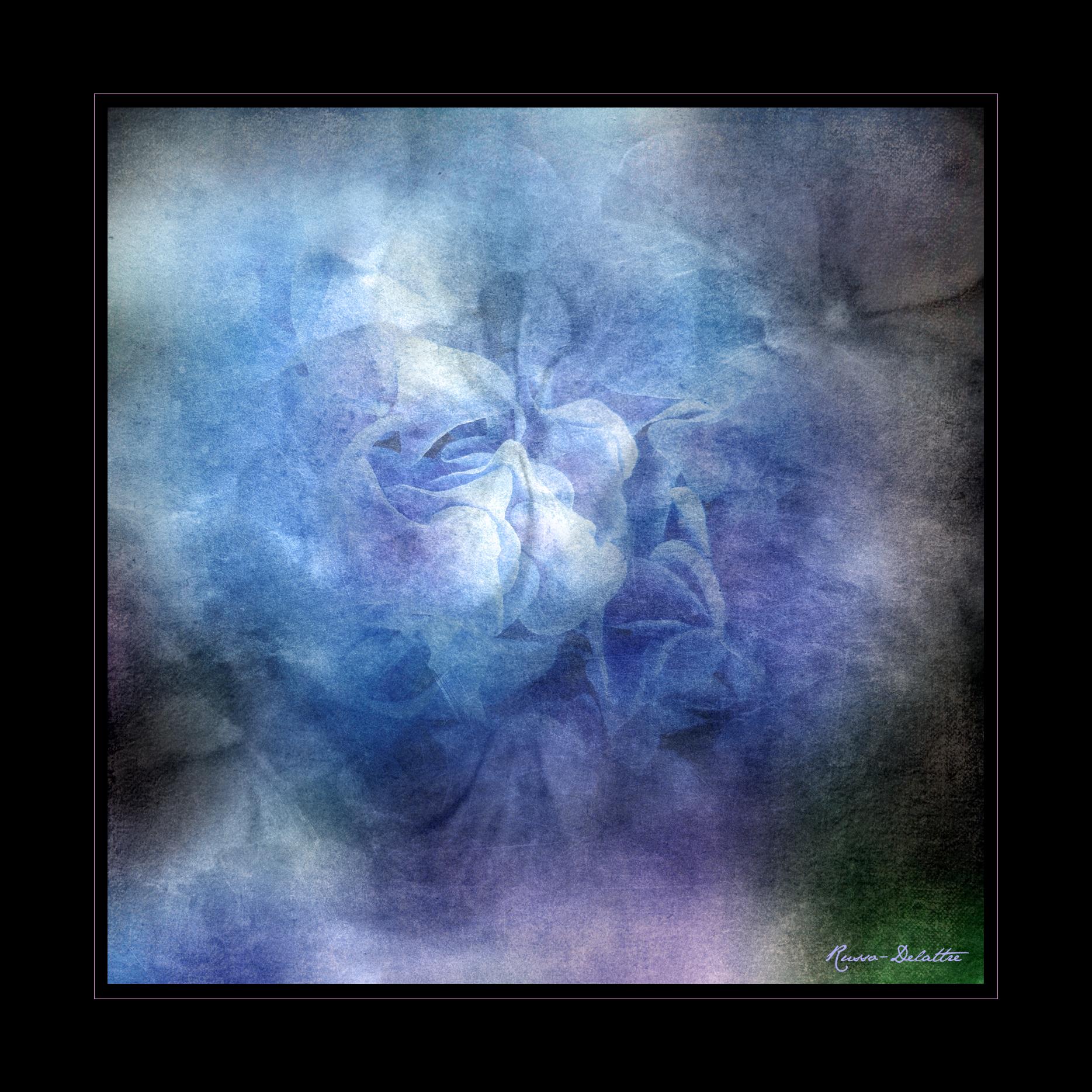 Thierry Russo-Delattre Photographie - fleurs du Périgord